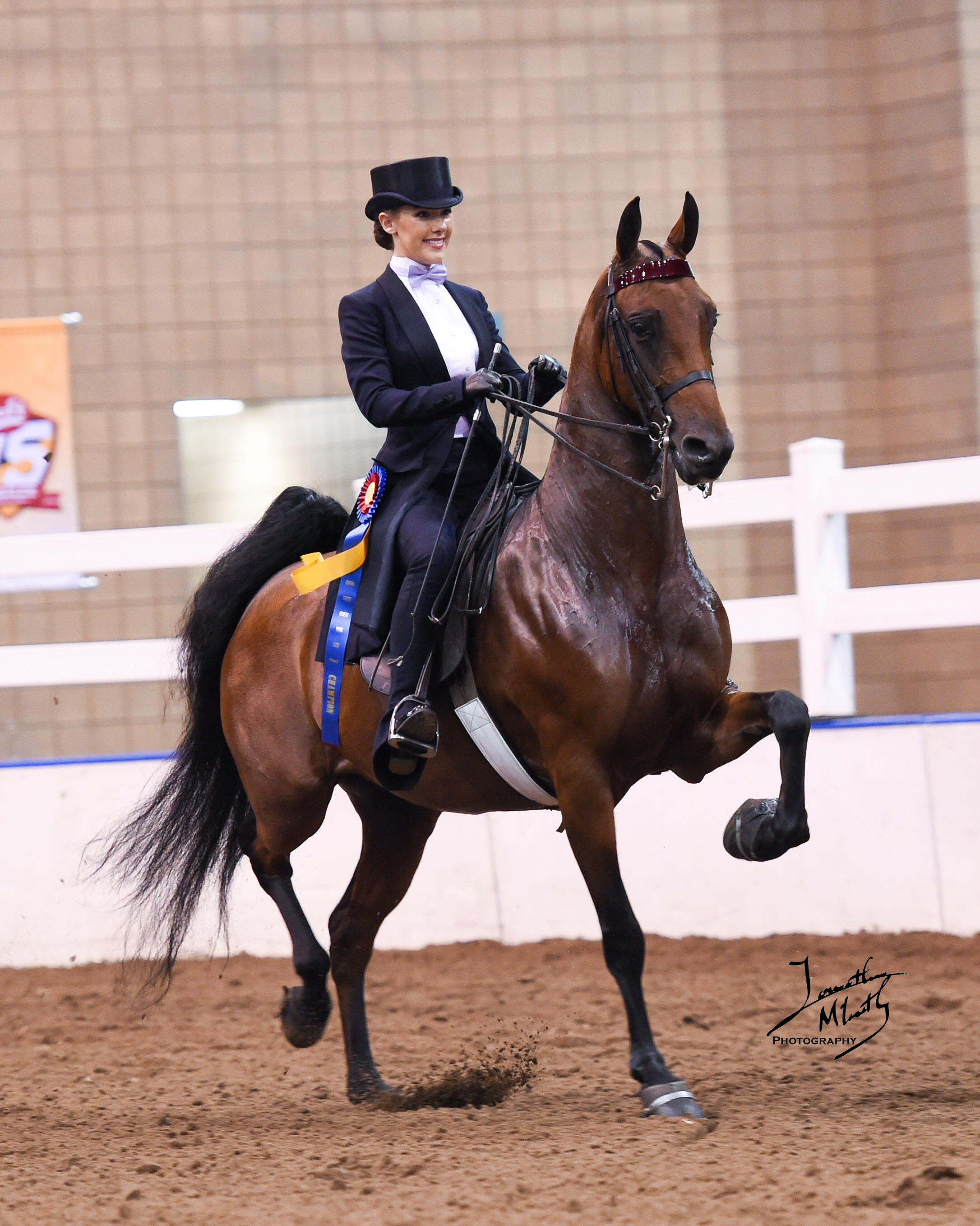 Sca Blog 187 Sca Student Places In Top 10 In Equestrian